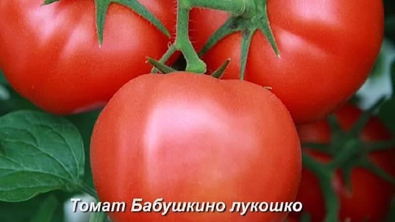 Сорт томата бабушкино – классика помидорного «жанра»