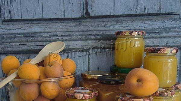 Особенности и характеристика сорта абрикоса успех