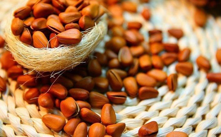 Сбор урожая кедровых орехов