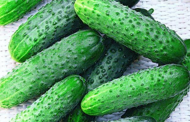 Огурцы сорта «клавдия f1»: описание, выращивание, уход