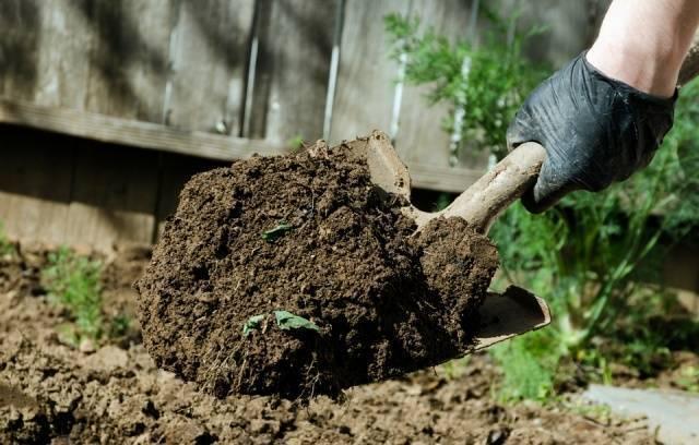 Когда сажать морковь в открытый грунт в мае 2019 года: даты для посадочных работ, как следует ухаживать за всходами после посадки