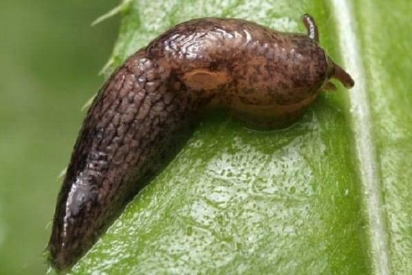 Растение самшит: посадка и уход в открытом грунте, фото, размножение и пересадка