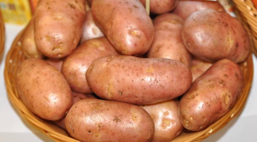 Подробное описание картофеля рябинушка: пошаговая инструкция по выращиванию и другие практические рекомендации
