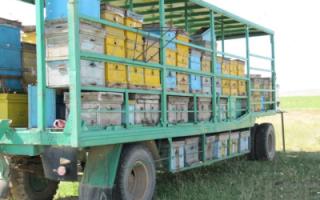 Кассетное пчеловодство: особенности, изготовление улья своими руками