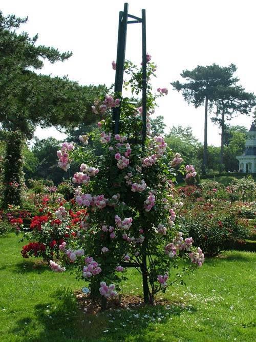 Опора для плетистой розы своими руками — распишем во всех подробностях