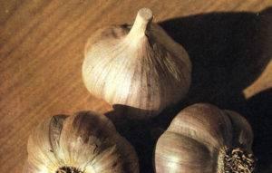 Чеснок - выращивание и уход за озимыми и яровыми сортами