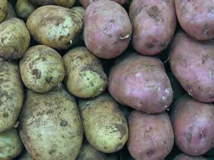 Командор плюс для обработки картофеля: инструкция
