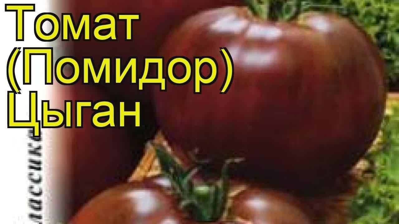 Характеристика и описание томата «цыган»
