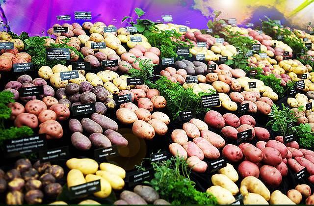 Топ-70 самых интересных и распространенных сортов картофеля