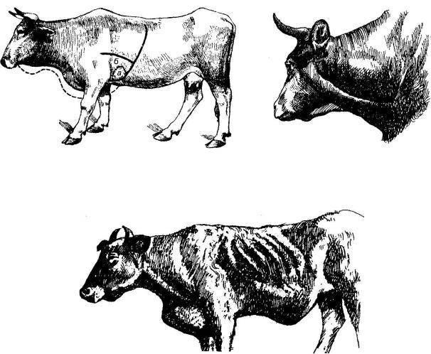Перикардит у животных