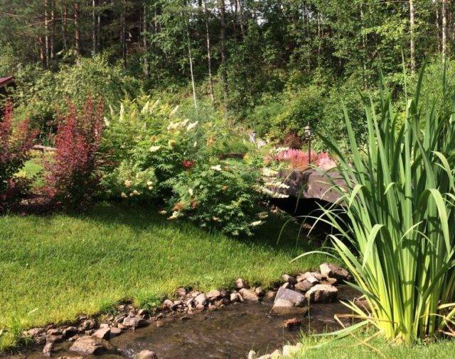 Рябинник (54 фото): описание кустарника, посадка и уход за растением, использование кустов в ландшафтном дизайне, размножение и обрезка