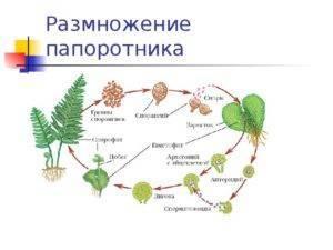 Папоротник в саду, посадка и уход особенности выращивания садового папоротника, самые распространенные виды