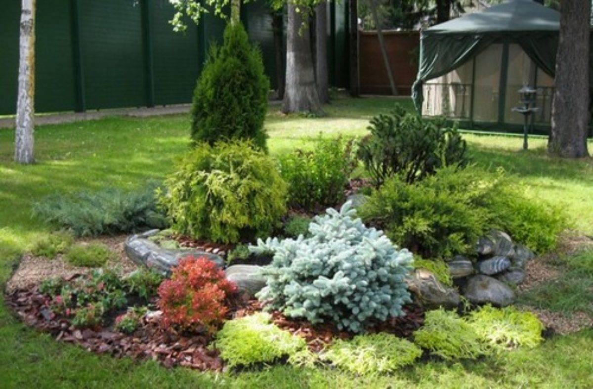 Растения для рокария: фото, названия цветов и хвойников для каменистых садов, советы по посадке