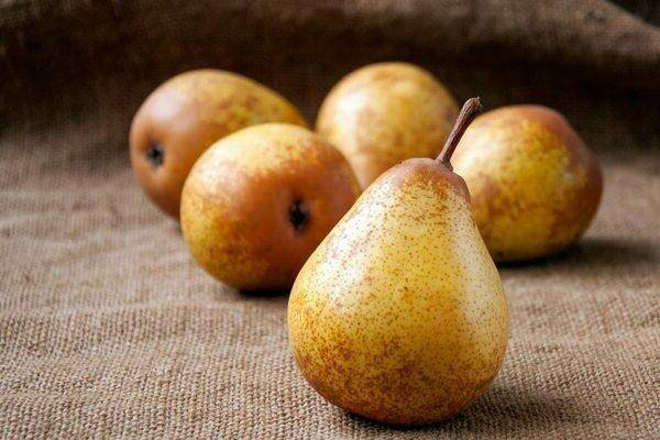 """Груша """"дюймовочка"""": фото плодов, описание характеристик и устойчивости к заболевания сорта"""