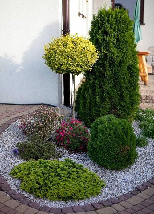 Хозери: туя западная, посадка и уход, выращивание и размножение в саду