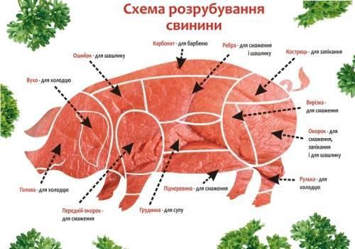 Кулинарная разделка и обвалка свиной туши — студопедия