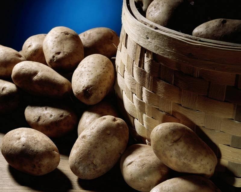 Сорт картофеля «венета»: характеристика, описание, урожайность, отзывы и фото