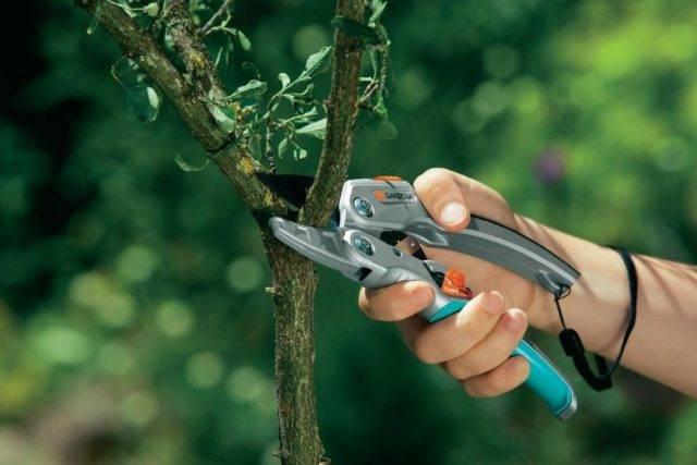 Обрезка винограда осенью: понятная инструкция для начинающих