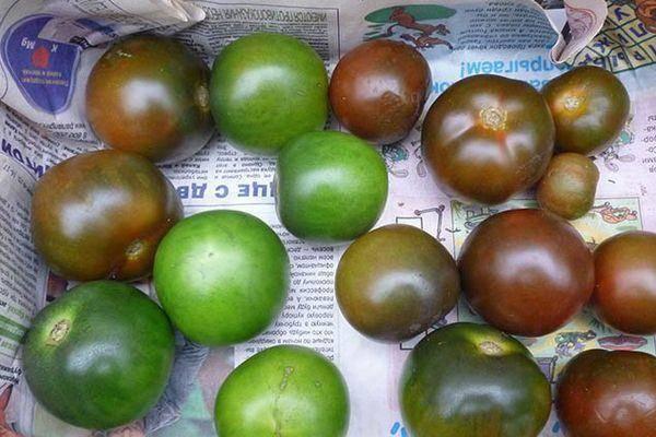 Сортовые особенности помидоров кумато