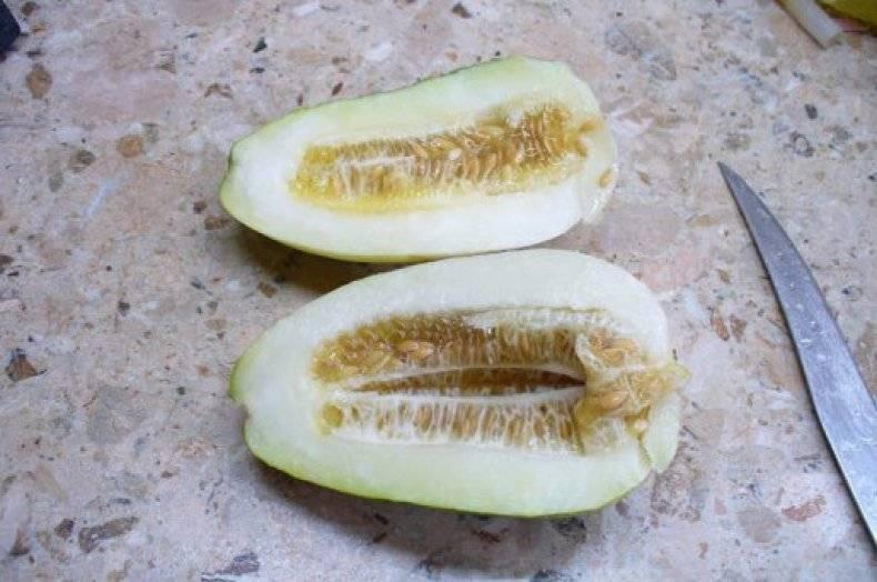 Что такое огурдыня: где взять семена и как ее вырастить