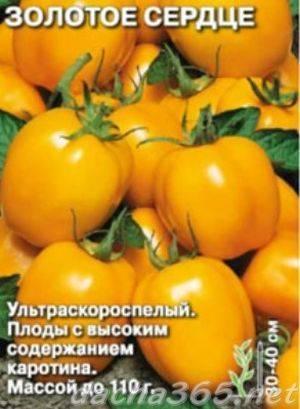 Созданный для северных регионов страны — томат снегирь: описание сорта и характеристики