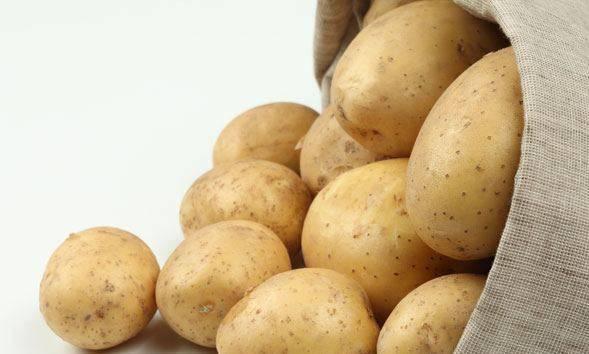 Картофель ирбитский: описание, особенности выращивания