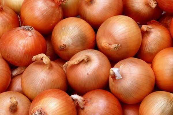 Популярный сорт лука геркулес. описание, выращивание и уход, сбор и хранение урожая
