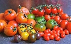 Сорта томатов с фото и описанием для средней полосы