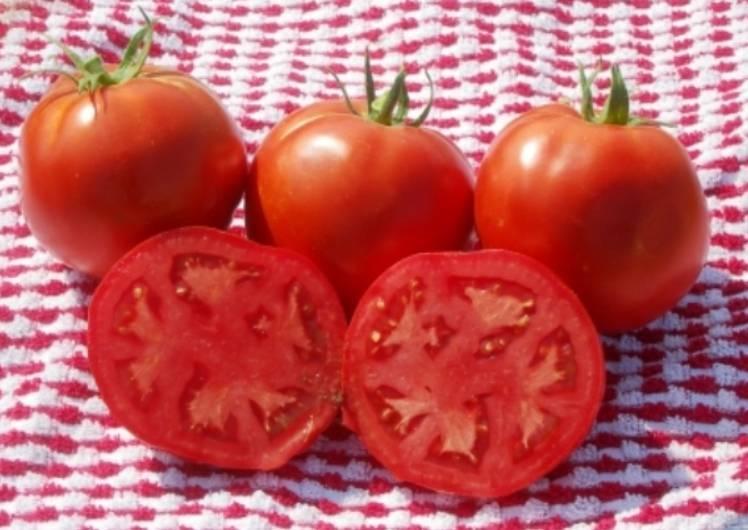 Томат линда f1 — описание сорта, урожайность, фото и отзывы садоводов