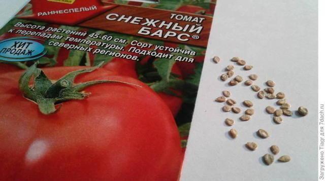 Описание раннеспелого сорта томата снежный барс и агротехника выращивания
