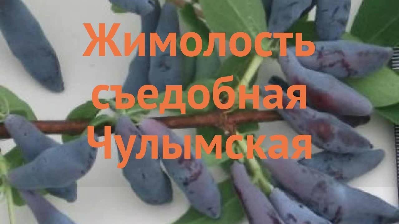 Жимолость съедобная бархат — основные характеристики и особенности