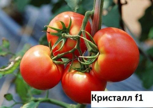 Томат ирина: характеристика и описание сорта, урожайность с фото