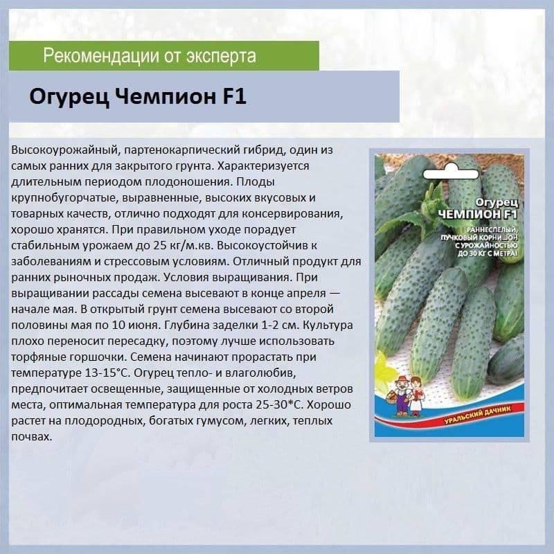 Огурцы генеральские сорт отзывы – огурец генеральский f1: отзывы, фото, особенности выращивания