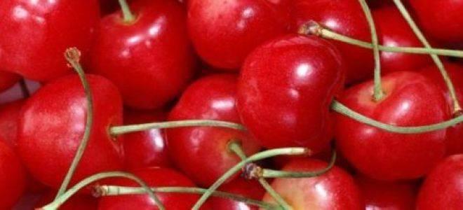 Черешня синявская — описание сорта, фото, отзывы садоводов