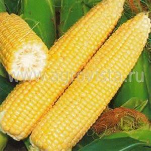 Кукуруза трофи f1: отзывы, посадка и уход