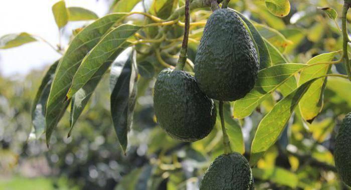 Если авокадо внутри потемнел