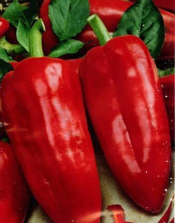 Плоды с яркой глянцевой кожурой — перец голубчик: полное описание сорта