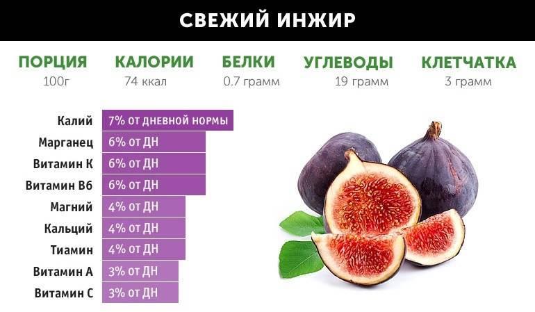 Инжир: польза и вред для организма, состав. лечение, народные рецепты
