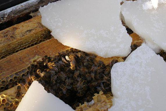 Зимовка пчел на воле, за и против
