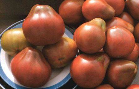 Сорт томата «японский трюфель черный»: описание, характеристика, посев на рассаду, подкормка, урожайность, фото, видео и самые распространенные болезни томатов