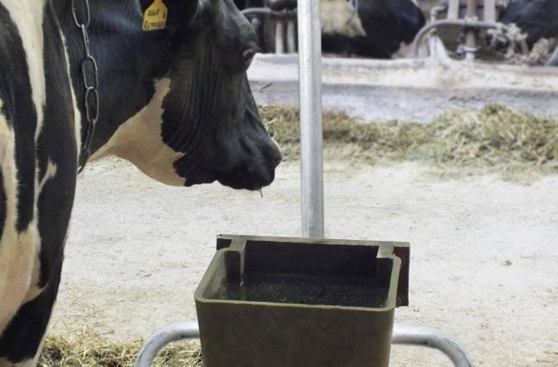 Почему бывает выкидыш у коровы