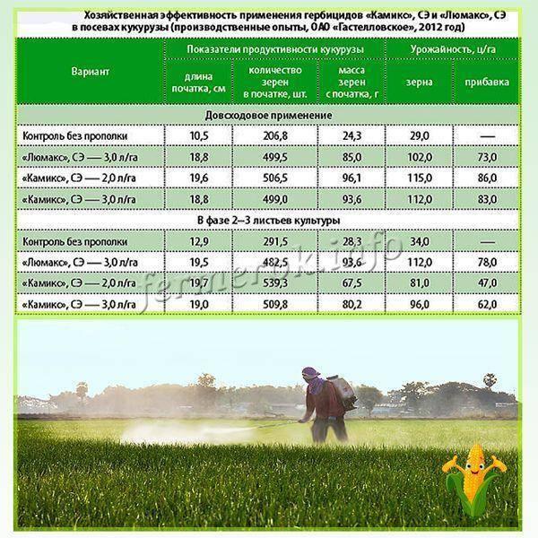 Гербициды для кукурузы - какие лучше применять, отзывы