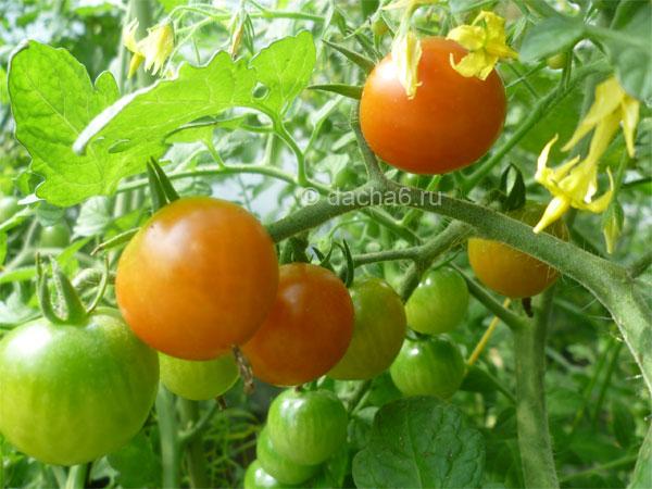Выбираем сорта перца для северо-запада на 2020 год для всех способов выращивания