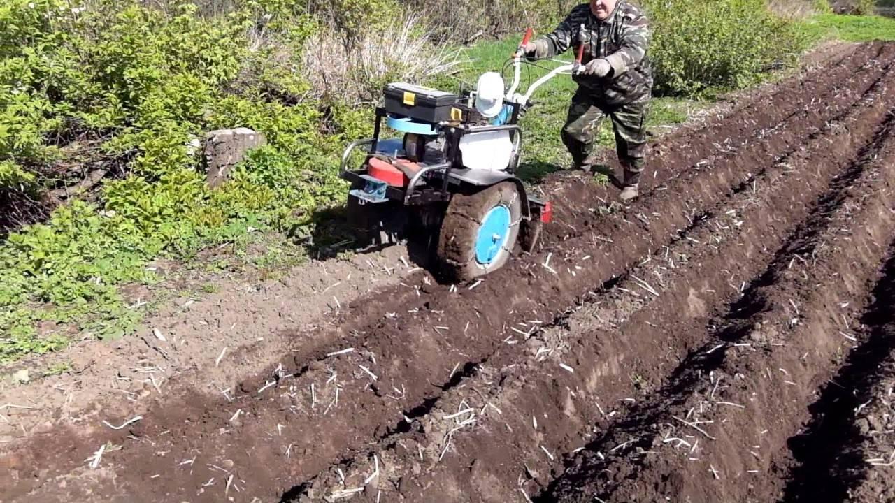 Какая должна быть глубина посадки картофеля, от чего она зависит и на что влияет