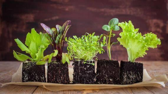 Оптимальная температура для рассады на разных этапах выращивания