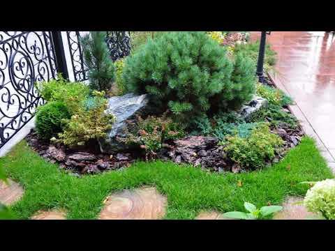 Туя в ландшафтном дизайне в сочетании с другими растениями