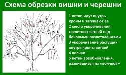 Способы обрезки слив по весне: советы начинающим садоводам