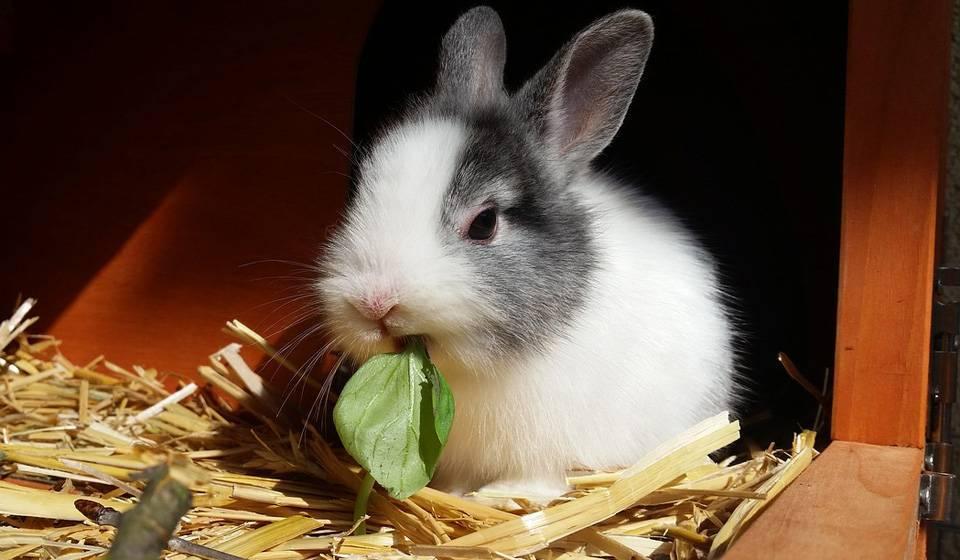 Чем кормить декоративного кролика в домашних условиях - что они едят, какую траву можно давать, чем можно кормить и сколько раз - рацион питания на сайте лапы и хвост