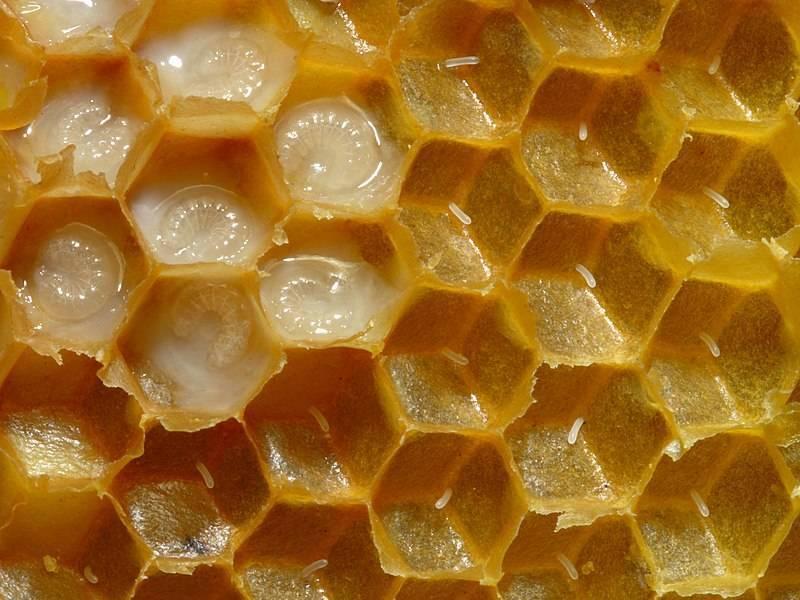 Чем полезен мед с маточным молочком?