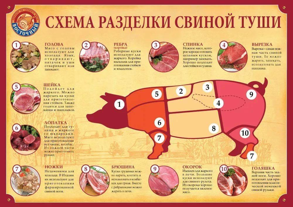 Разделка туши свинины на части по правильной схеме